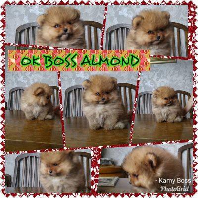 Ok Boss Almond