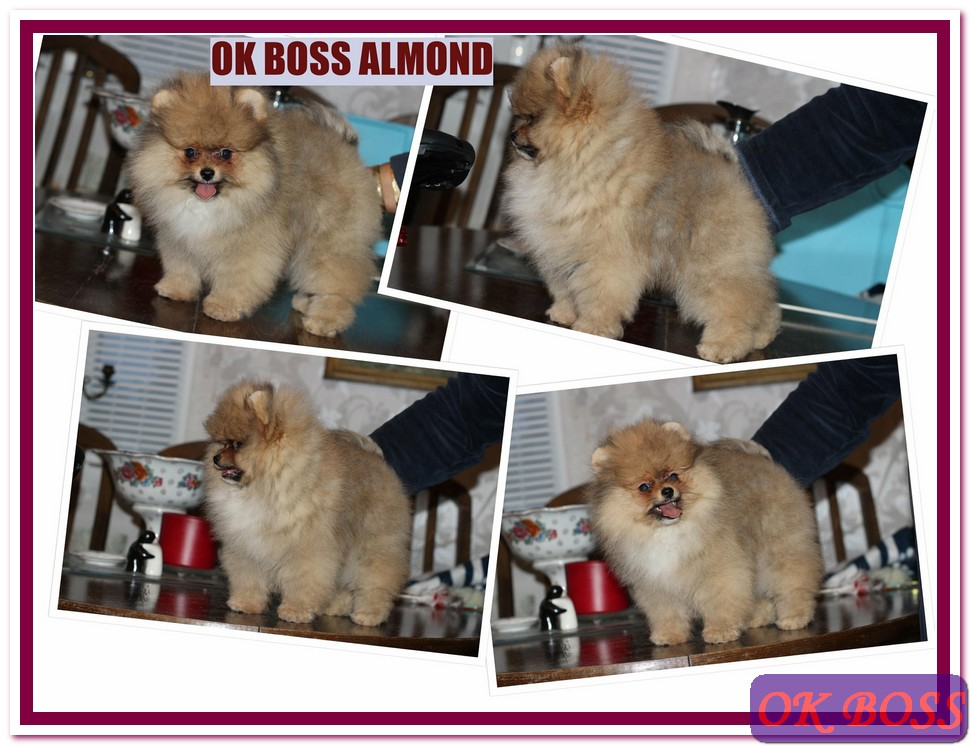 Ok Boss Almond