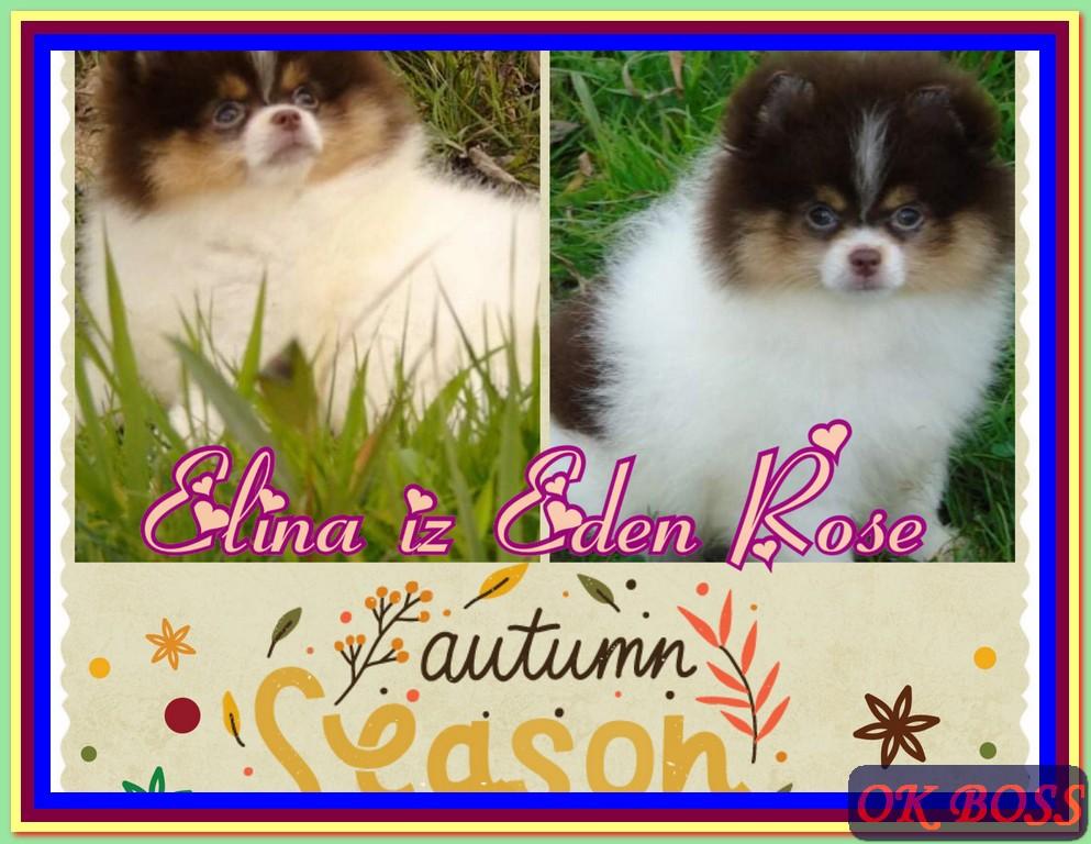 Elina iz Eden Rose
